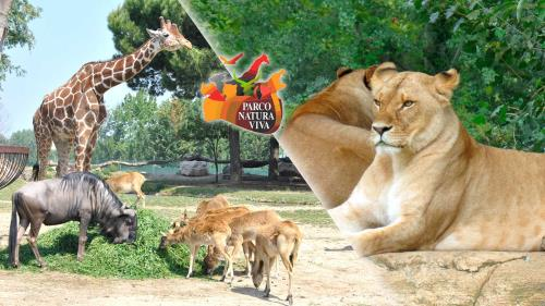 divertimenti - Parco Natura Viva